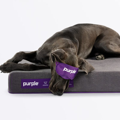 buy the purple pet bed free shipping returns 100 night trial. Black Bedroom Furniture Sets. Home Design Ideas