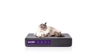 Pet Bed Cat