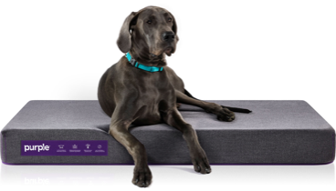 Pet Bed Large Dog