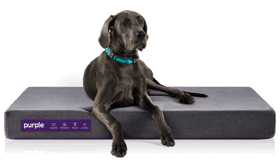Pet Bed Product